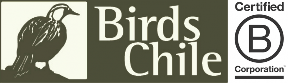 BirdsChile - Travel- Rewilding  & Giving Back